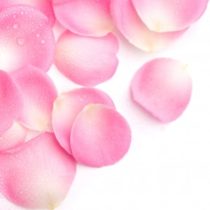 rose.petals